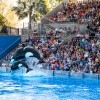 Sea World &#8211; Orlando