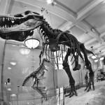 Muzej zgodovine - New York