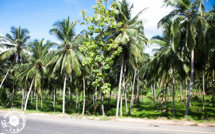 Negombo - Sigeriya