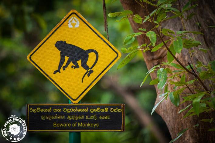 Srilanka-Sigeriya-4868
