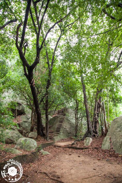 Singeriya - Pidurangala Rock