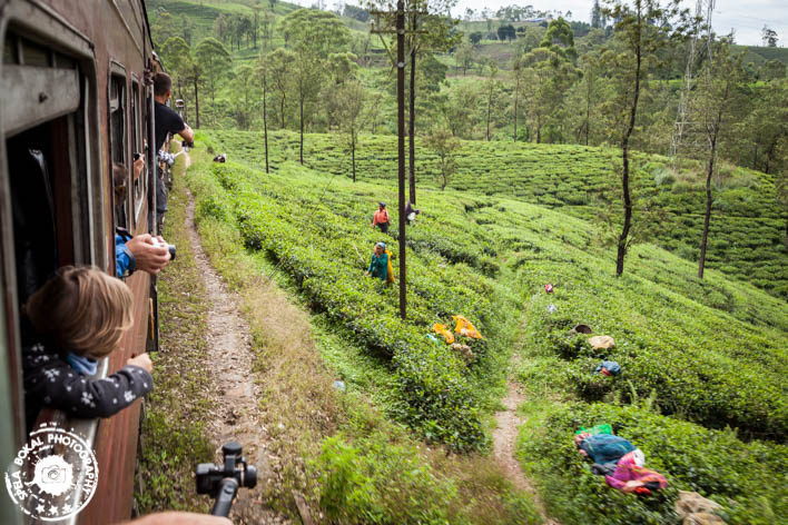 Razgledni vlak čez osrednjo Sri Lanko vodi mimo neštetih plantaž čaja.