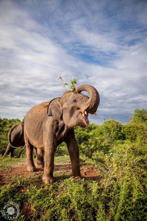 SriLanka-Udawalawe-NP-6589
