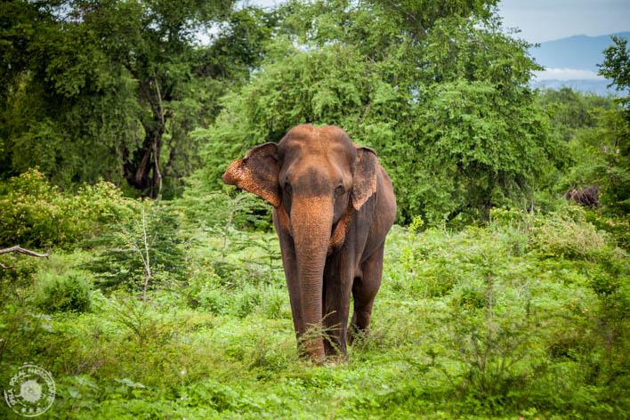 SriLanka-Udawalawe-NP-6645