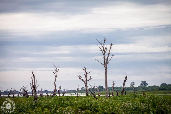 Pokrajina v parku UdaWalawe
