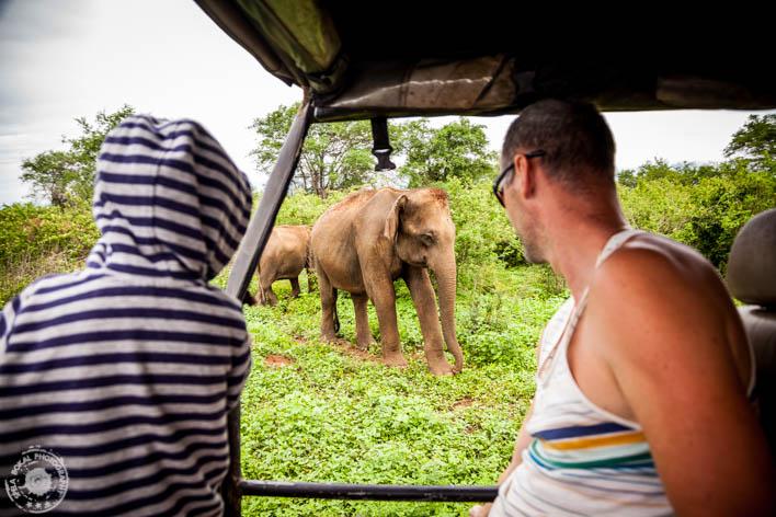 SriLanka-Udawalawe-NP-6804