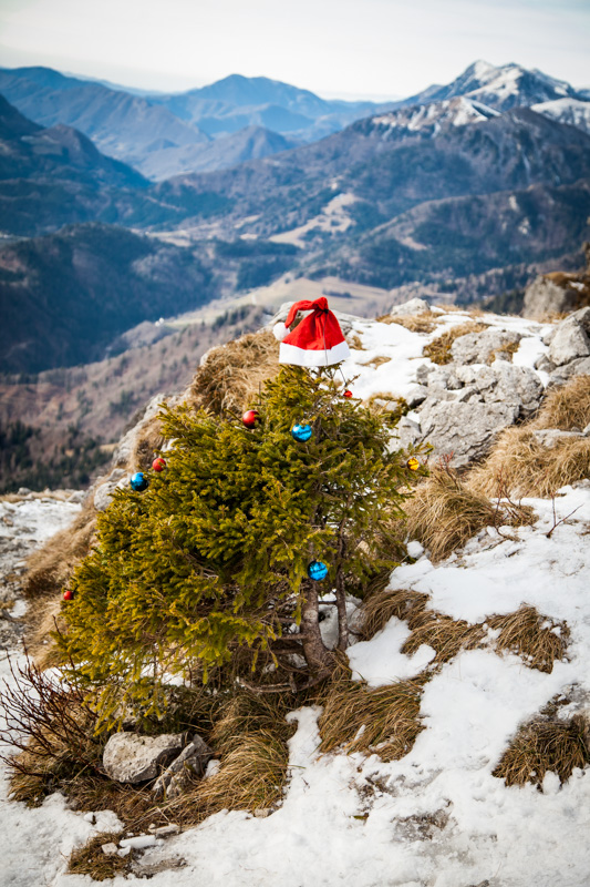Christmas trees on Ratitovec - Slovenia