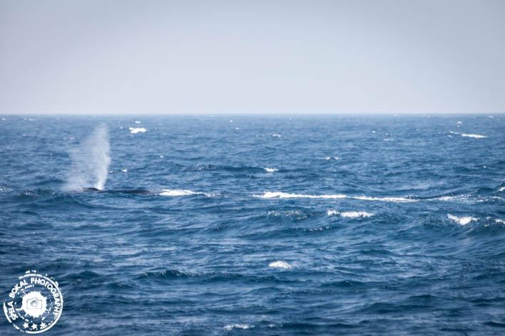 SriLanka-Mirissa-Blue-whales-7139