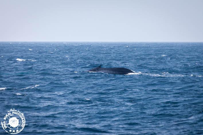 SriLanka-Mirissa-Blue-whales-7141