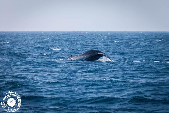 SriLanka-Mirissa-Blue-whales-7153