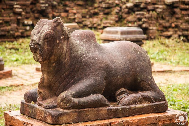 Sveta krava v hindujskem templju My Son