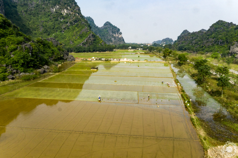 Pogled na riževa polja iz vrha.