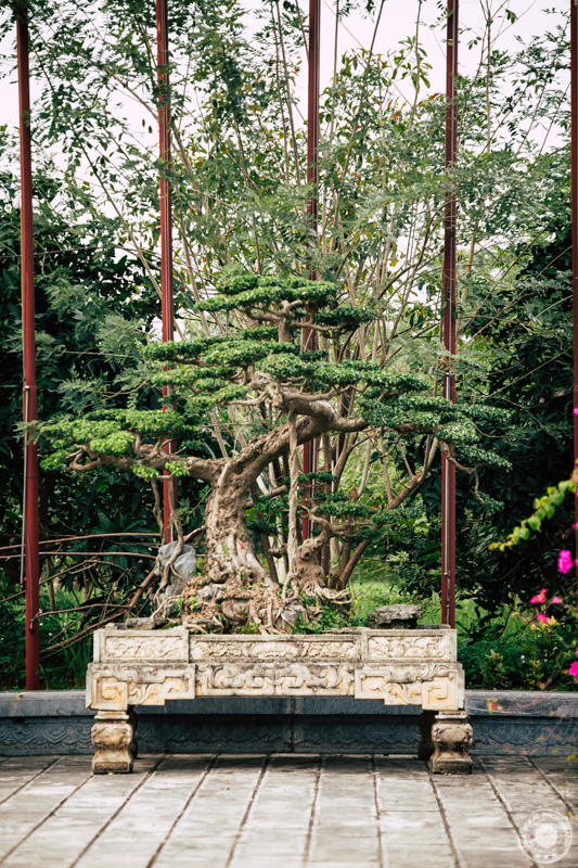 Mogočni bonsai v budističnem kompleksu Bai Dinh.